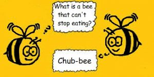 You must bee joking-What do you call a bee that can't stop eating-chub-bee