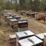 My 75 Hives